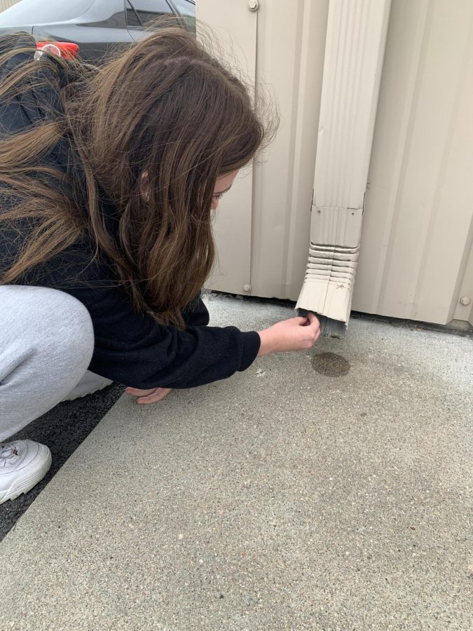 Searching for Caches: Hailey Wojtas (22) is searching for a geocache on the back side of Salon DeMarco Suites.