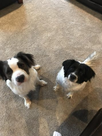 Tommy (left) and Mallory (right) were both adopted from Dolly